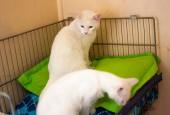 2-inicio-Gatos-en-cama-Inverness