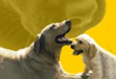 Canela - Inverness Hotel de Mascotas